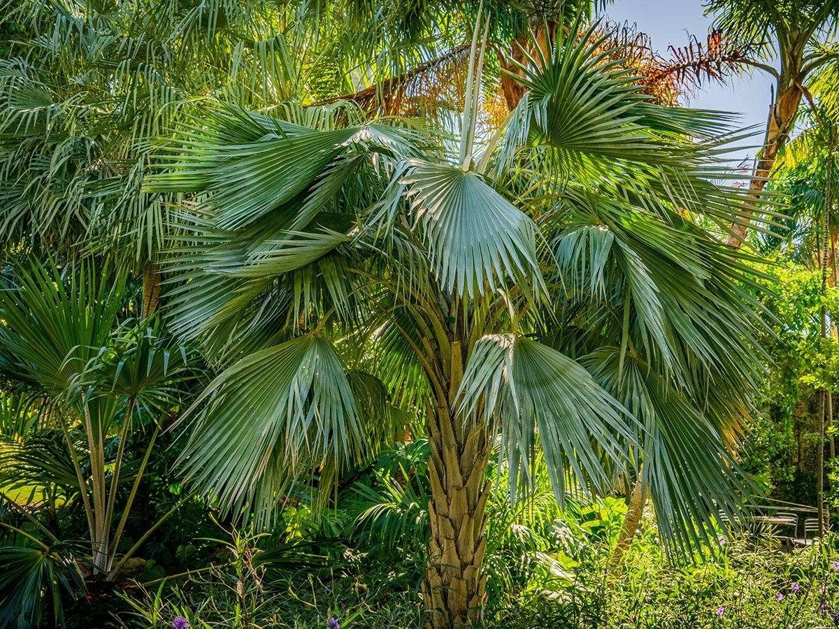 Palm Garden | Miami Beach Botanical Garden within Miami Beach Botanical Garden Map